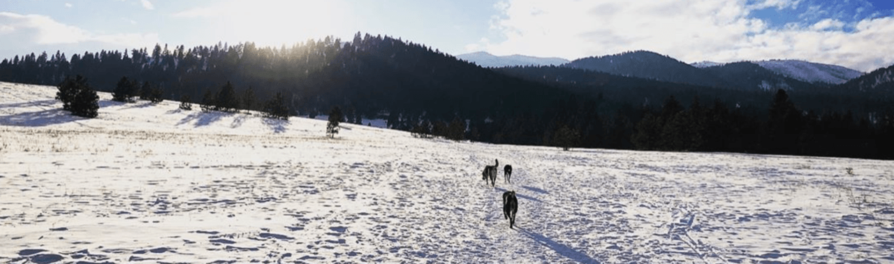 Dog-Friendly Winter Trails in Missoula