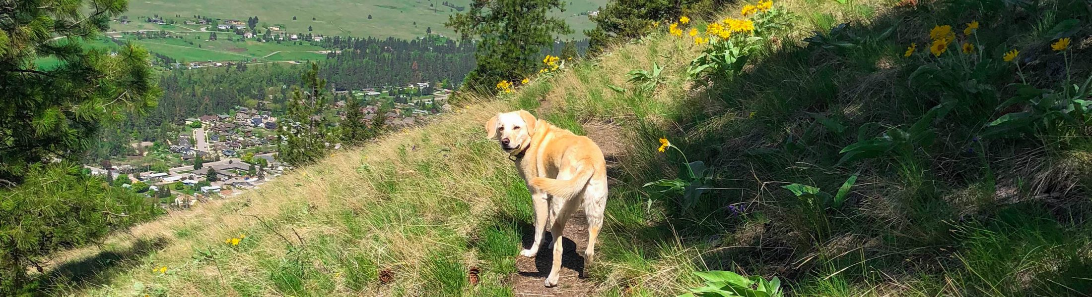 These Dogs of Missoula Are Guaranteed to Make You Smile